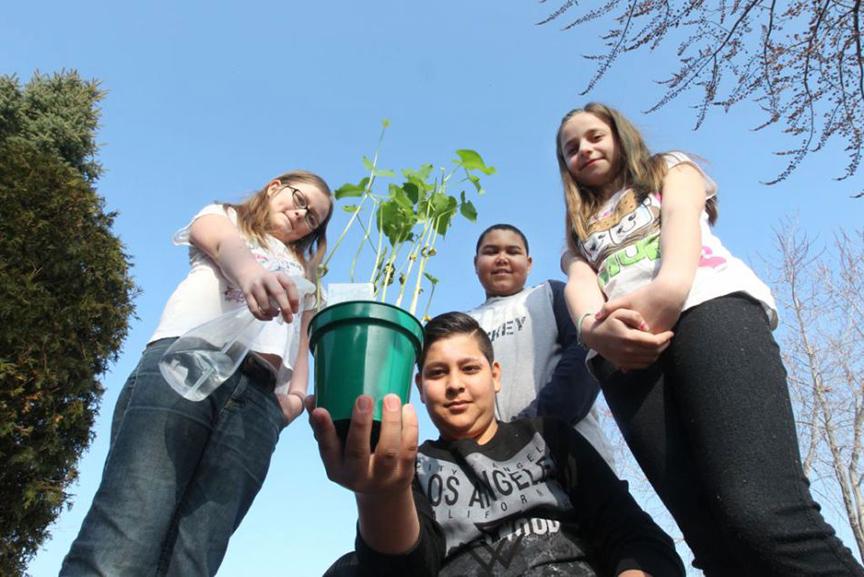 Community garden sprouts at Roseville Public School