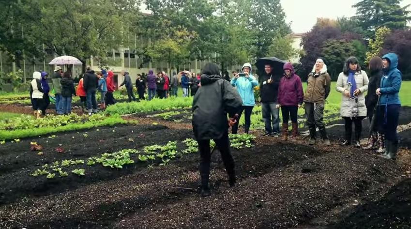 Project Spotlight Series: Fresh Roots Urban Farm