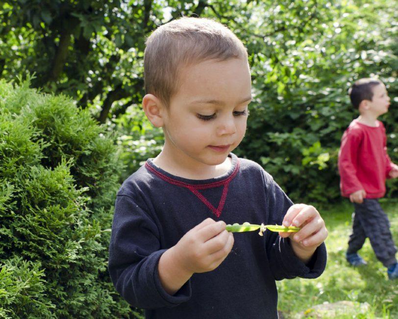 Helping kids develop a green thumb: Mark Cullen