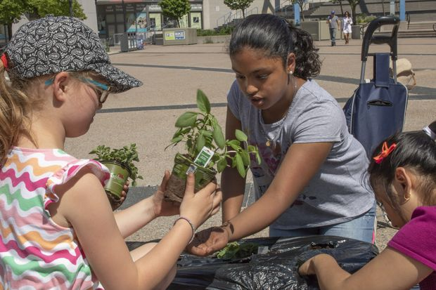 Toronto students dig in to healthy eating with 'plant-in'