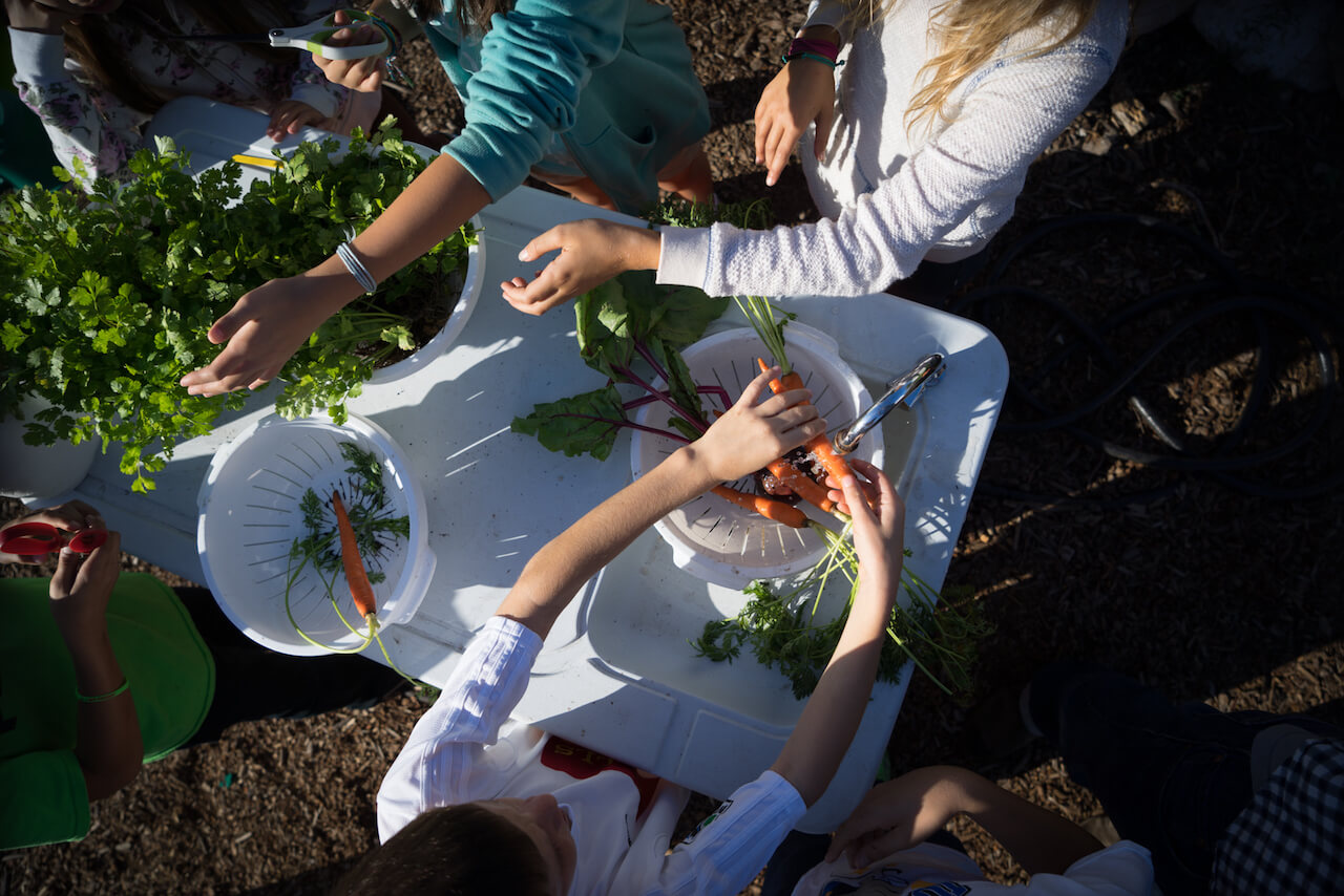 Gardens at School Might Boost Availability of Vegetables at Home