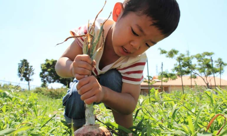 National Farm-to-School Month: Highlighting 30 Innovative Programs from Across the Globe