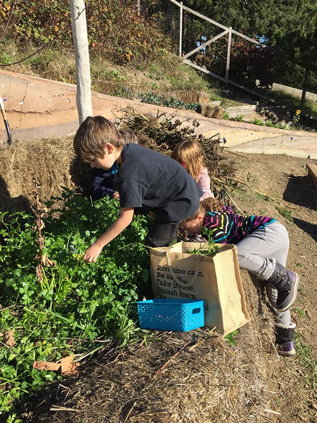 Farm to School, Farm to School Canada