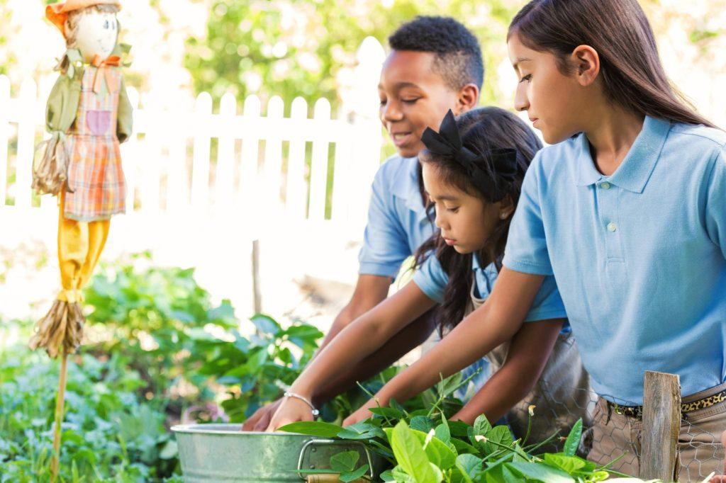 De la ferme à l'école: nouveaux investissements pour encourager les initiatives partout au pays